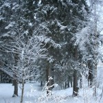 Регион Куопио (Финляндия): СПА, аквапарки, рыбалка и гастрономия