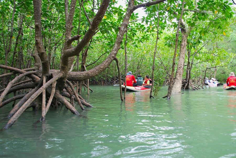 каноэ в мангровом лесу
