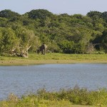 Сафари на Шри-Ланке: Национальный парк Яла