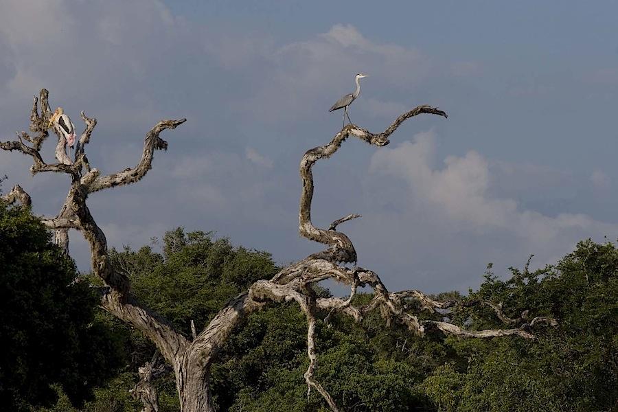 речные птицы в Национальном парке
