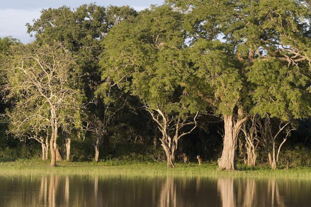 джунгли в Яла
