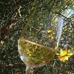 Чем итальянское spumante отличается от французского шампанского?