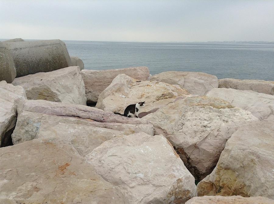 кот, охотящийся за крабами на набережной Соттомарина