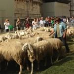 Овцы у Дуомо в Милане