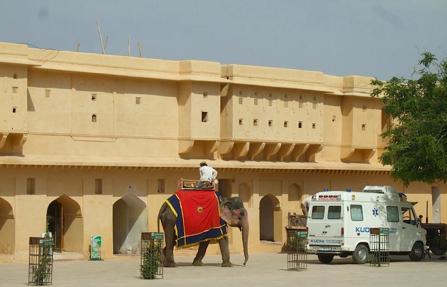 Слон, у дворца махараджи, на слоне можно прокатиться