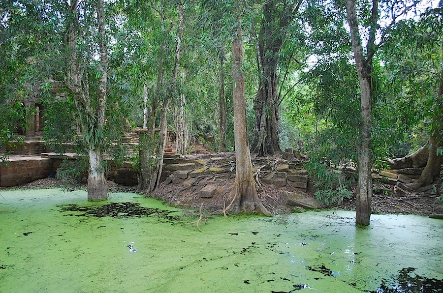 заросший бассейн в Ангкоре