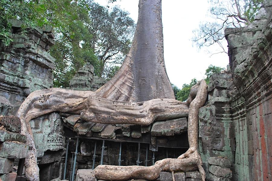 дерево, растущее сквозь крышу храма