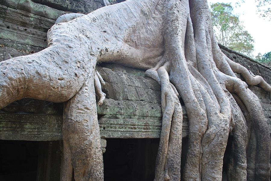 корни деревьев на крыше храмов