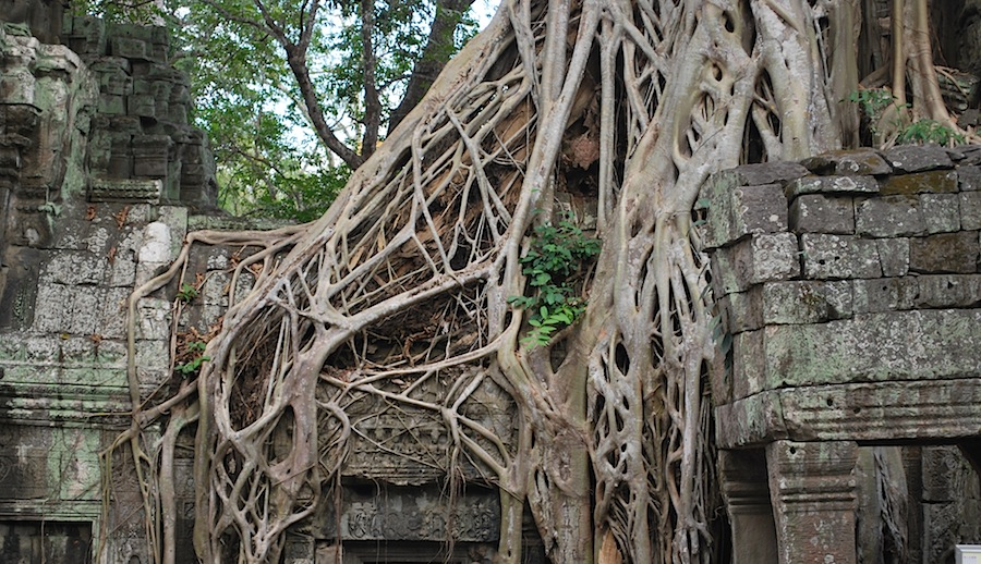 "храм Та Прохм, где снимали ""Лару Крофт"""