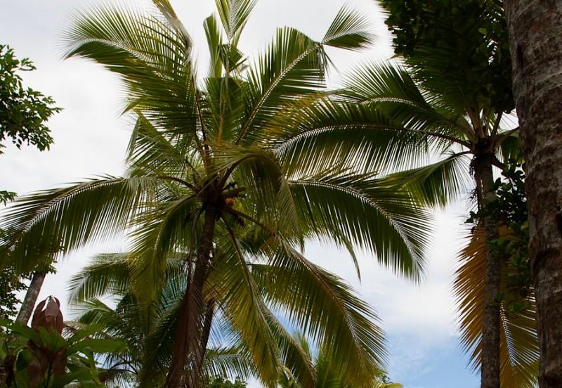 пальмы в Хиккадуве