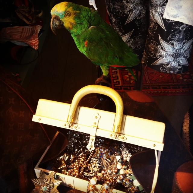 попугай в Madame Pauline Vintage