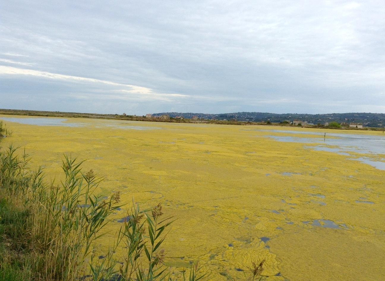желтое цветение солевых озер