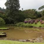 Королевский Ботанический сад на Шри-Ланке