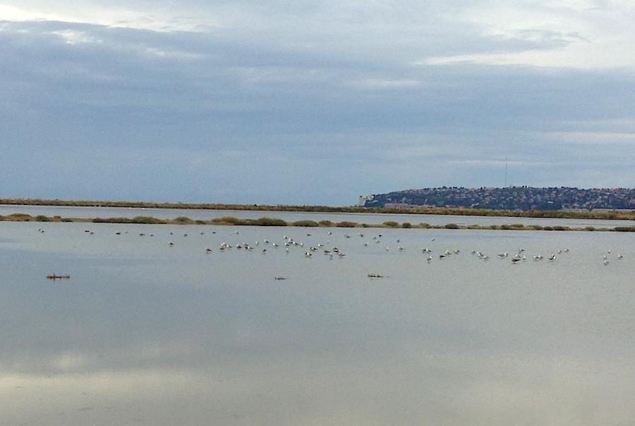 птицы - полноценные хозяева Фонтанидже