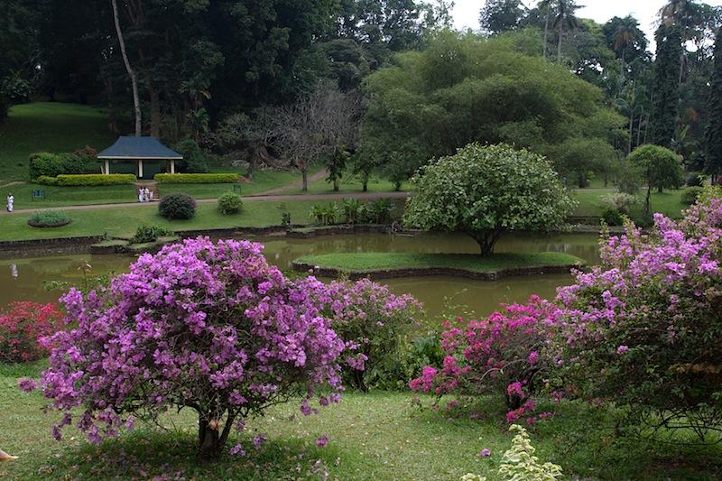 японский садик в Королевском саду