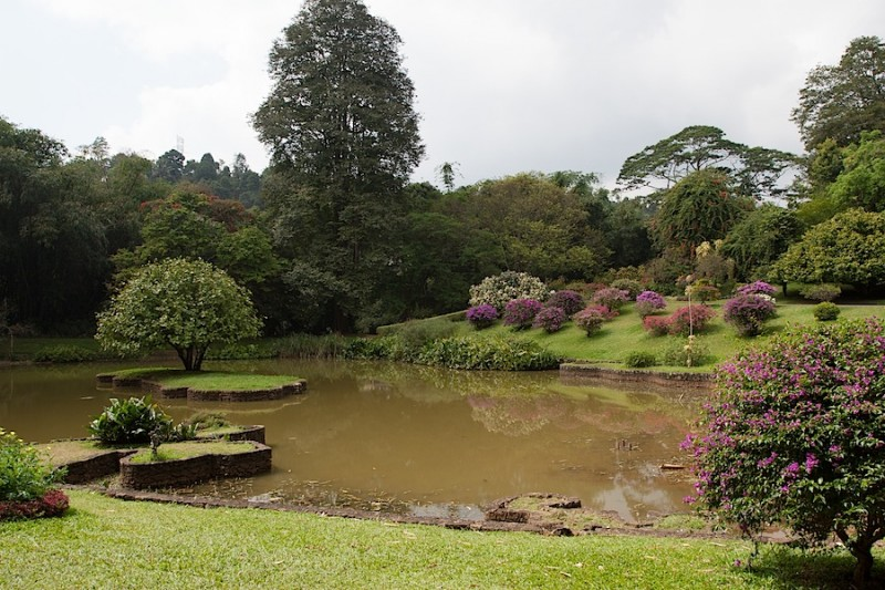 Японский садик на берегу пруда (Королевский сад на Шри-Ланке)