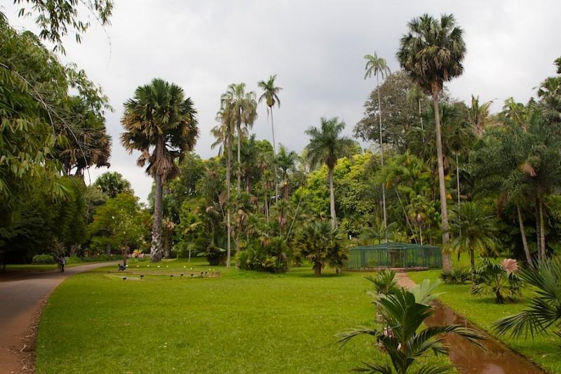 всего лишь несколько видов пальм из 157