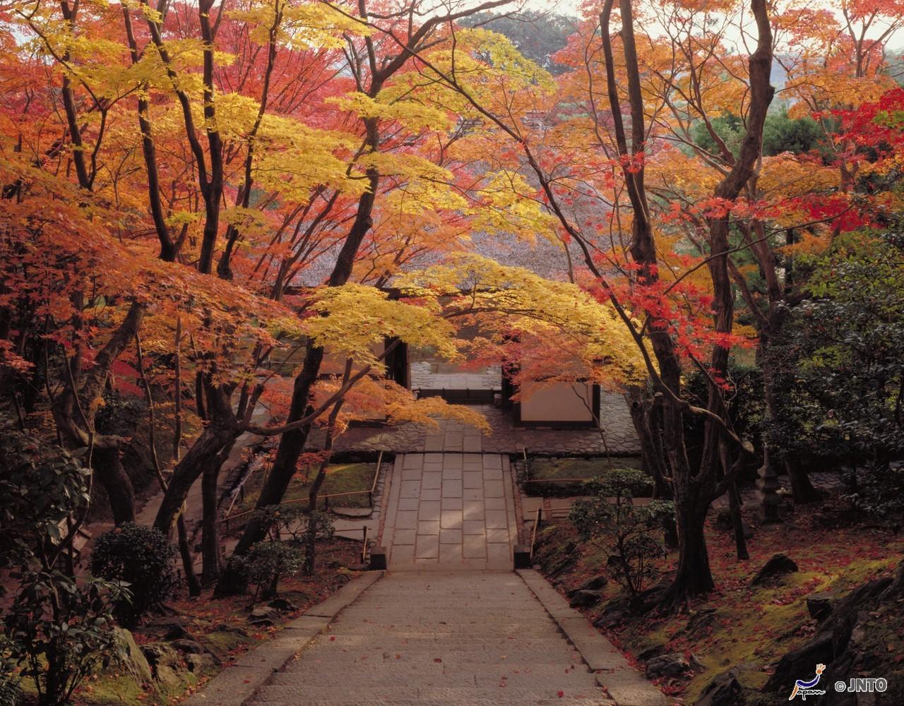 храм в Киото