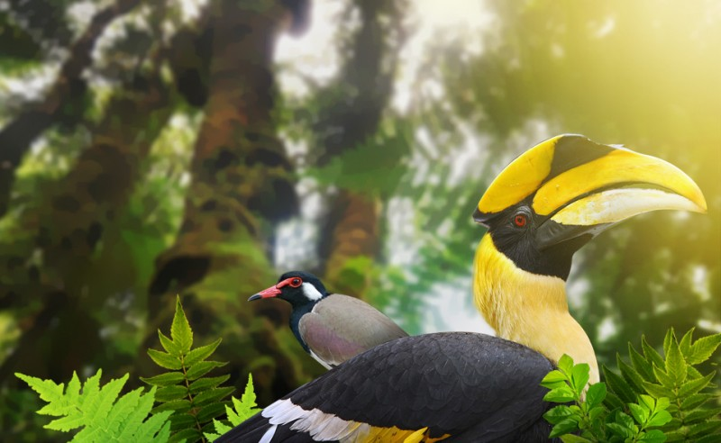 птицы на Лангкави