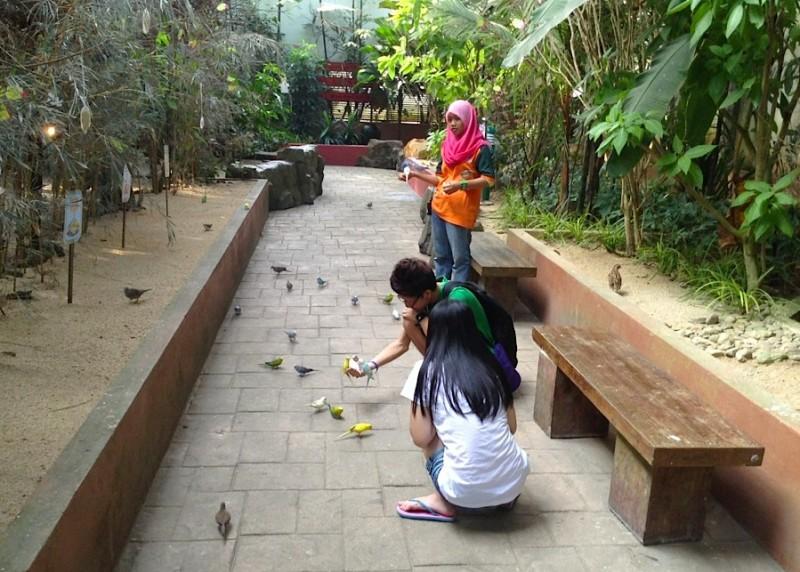 Птицы в Wildlife Park не боятся людей
