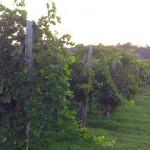 Итальянский регион Фриули: вино, города, достопримечательности