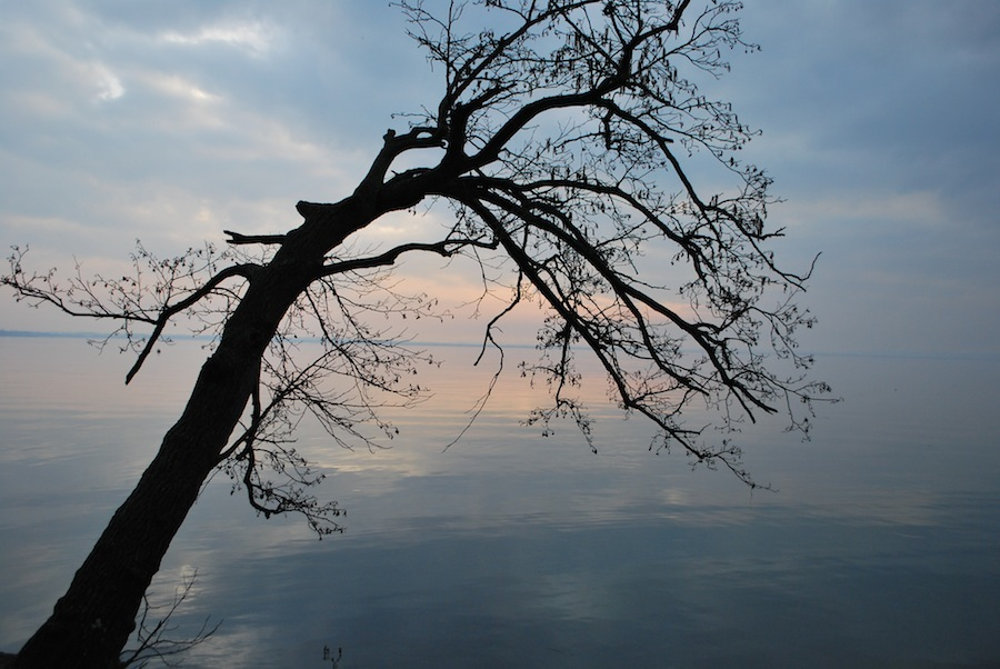 Деревья склонились над озером