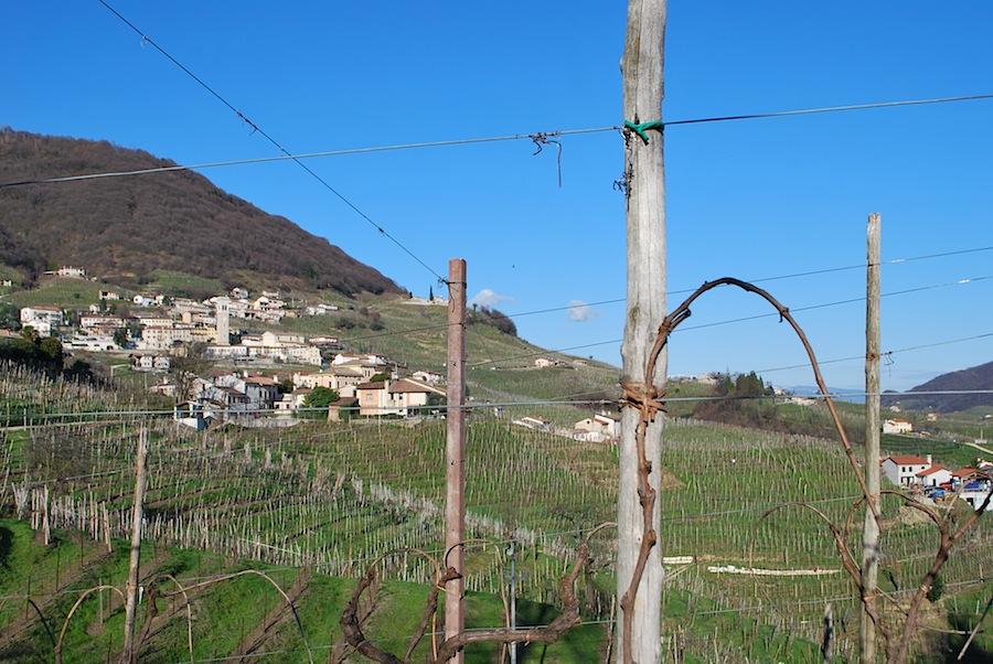 виноградник Просекко