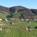 Италия. Виноградники на холмах Просекко (Prosecco)