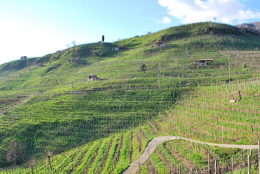 бесконечные виноградники зоны просекко