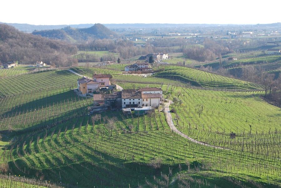 виноградные лозы в Cartizze
