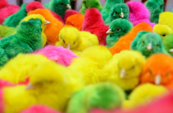 крашеные цыплята на рынке Филиппин