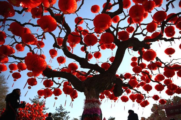 дерево, украшенное красными фонарями в Пекине
