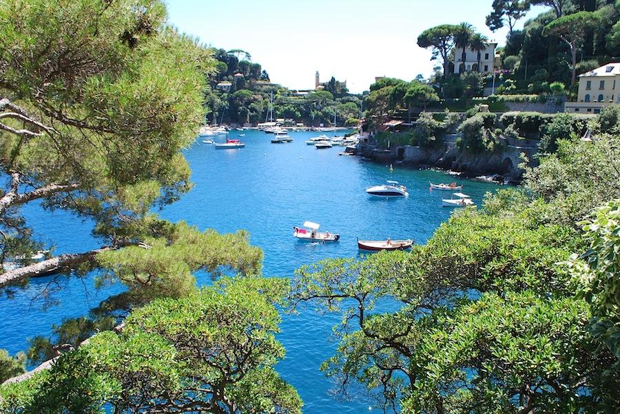 Хвойные деревья и море в Портофино