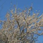 Viva Primavera: приметы итальянской весны
