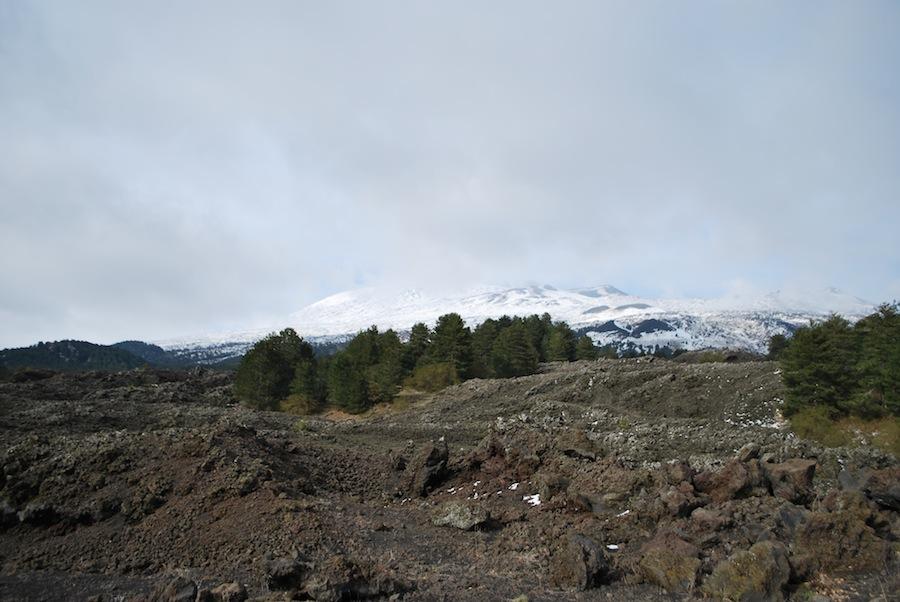 растительность на склонах Этны
