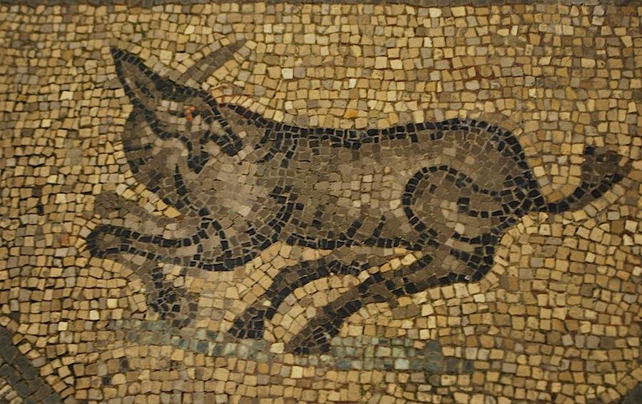 изображение собаки на напольной мозаике