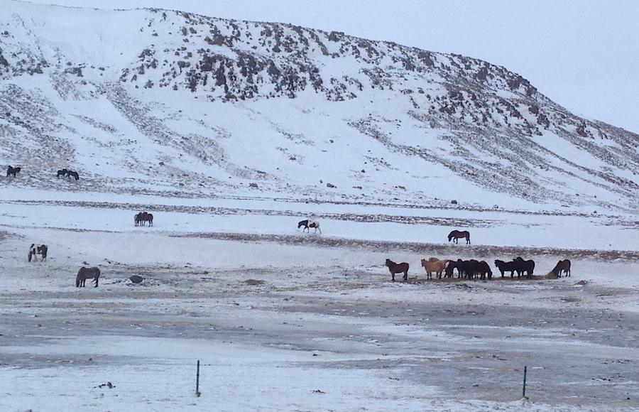 лошади пасутся последи снежного пейзажа