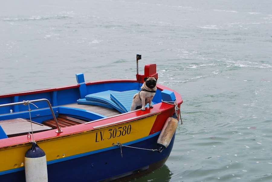 лодка с мопсом причаливает к Торчелло