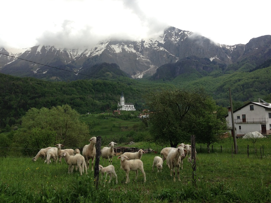овцы, горы, Словения
