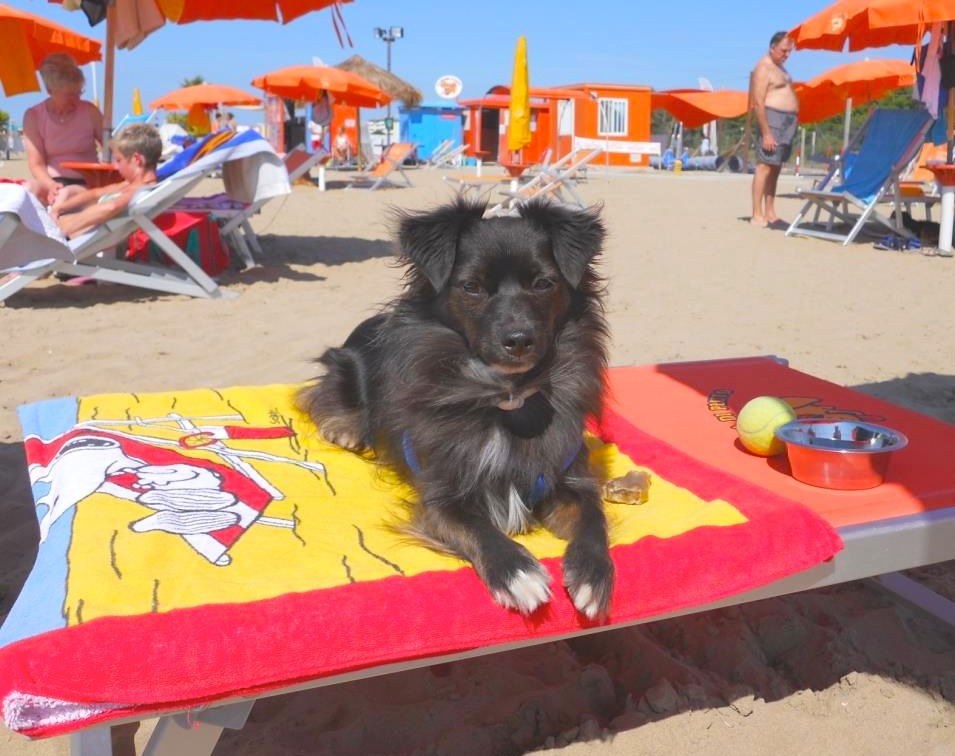 Пес Пиппо отдыхает на Spiaggia di Pluto!