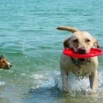 Dog-friendly Beaches в Италии: пляжи, где вашей собаке будут рады