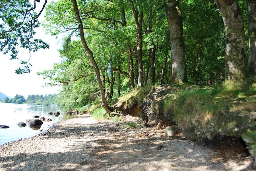 деревья на берегу озера Lox-Oy