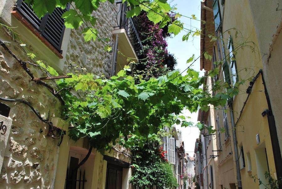 виноградная лоза на улице старого города, Антиб