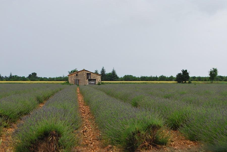 лавандовые пола в Провансе
