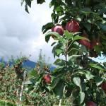 Кухня Южного Тироля: что есть и пить в Альто-Адидже
