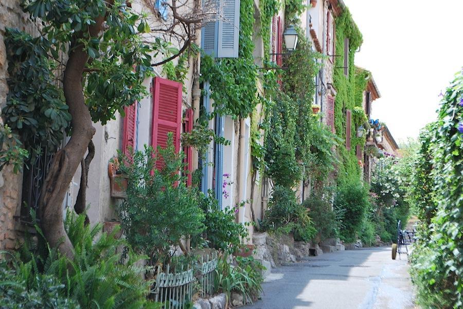 виноградные лозы на улицах города