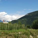 Фоторепортаж: яблочные плантации Южного Тироля