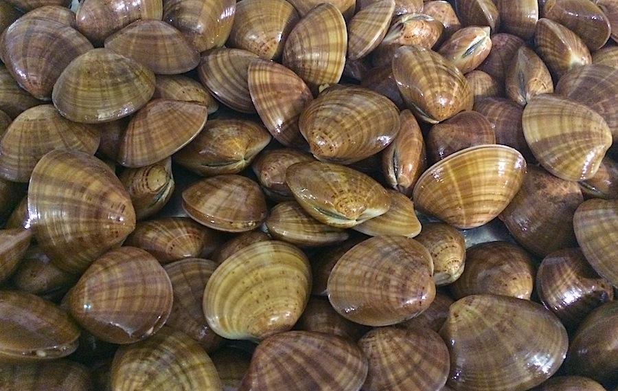 моллюски Fasolari