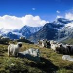 Лучшие виды Швейцарии: Церматт и гора Маттерхорн