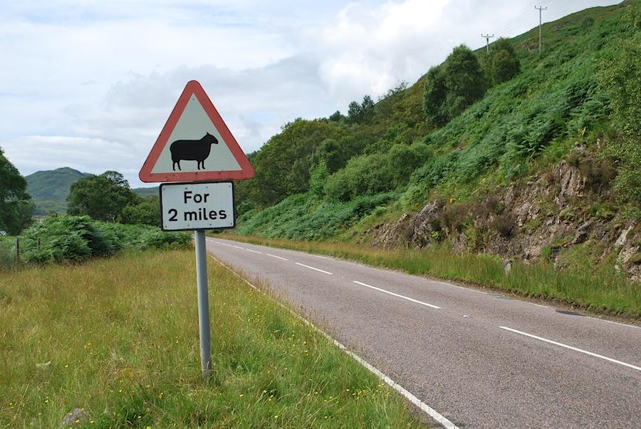 дорожный знак, предупреждающий об овцах